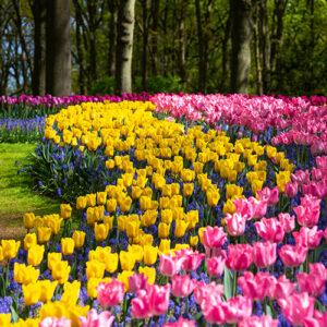 Gartencenter: Veranstaltungen Frühling