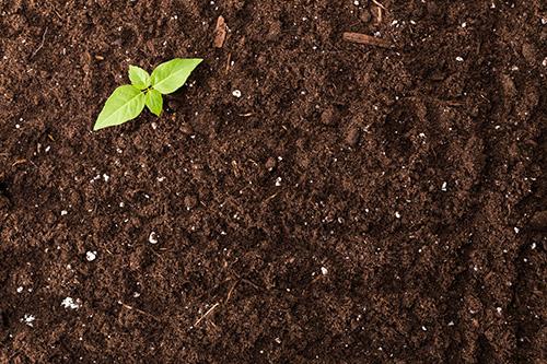 Riechers Pflanzenwelt | Abteilungen: Erde
