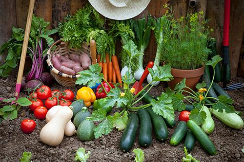 Riechers Pflanzenwelt | Abteilungen: Gemüse