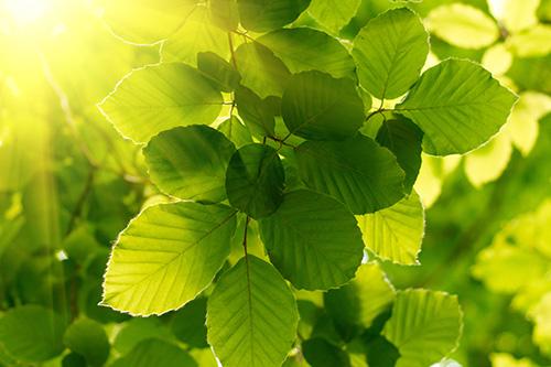 Riechers Pflanzenwelt | Abteilungen: Laubbäume