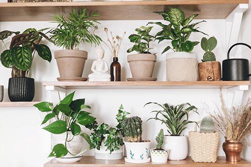 Riechers Pflanzenwelt | Abteilungen: Zimmerpflanzen