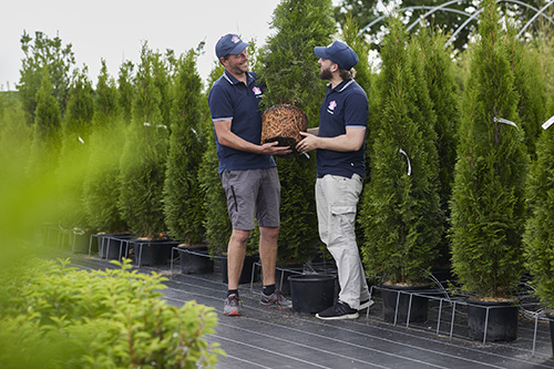 Riechers Pflanzenwelt | Anwachsgarantie